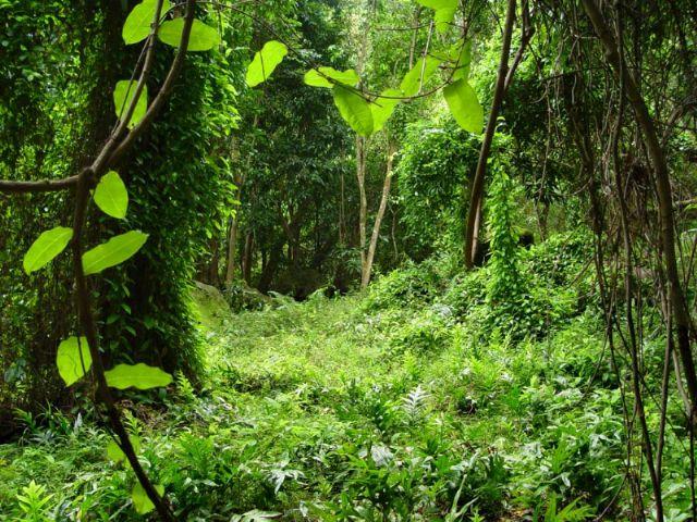 New Zealand rain forest