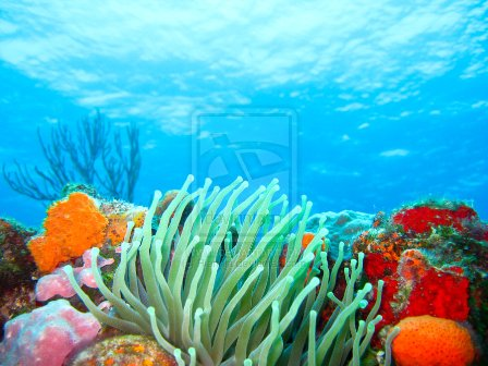 Caribbean Christmas Tree by Riannia 40 Mind Blowing Coral  Photography