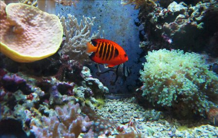 Orange Fish in a blue world by Midnight Cardinal 40 Mind Blowing  Coral Photography