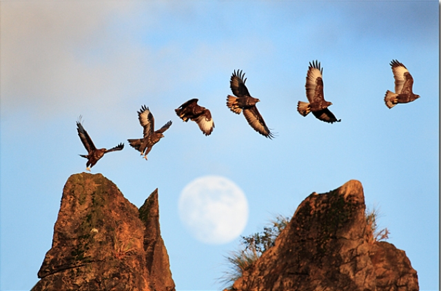 Fly Me to the Moon para Rafa 30 Beautiful Examples of Animal  Photography