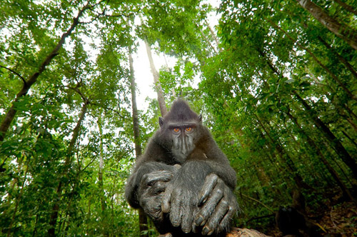 Wild life photography monkey 30 Beautiful Examples of Animal<br /> Photography