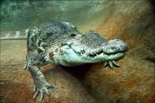 aligator animal photography 30 Beautiful Examples of Animal<br /> Photography