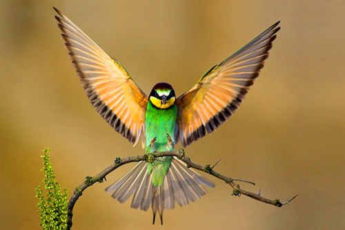 animal photography beautiful birds 30 Beautiful Examples of Animal
