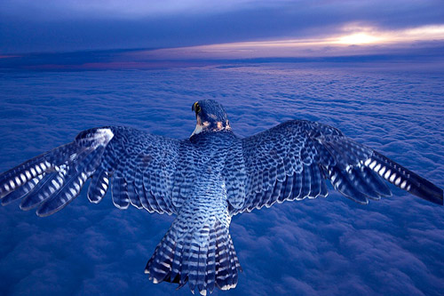animal photography bird flying 30 Beautiful Examples of Animal<br /> Photography