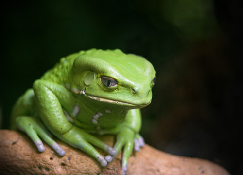 animal photography frog 30 Beautiful Examples of Animal  Photography