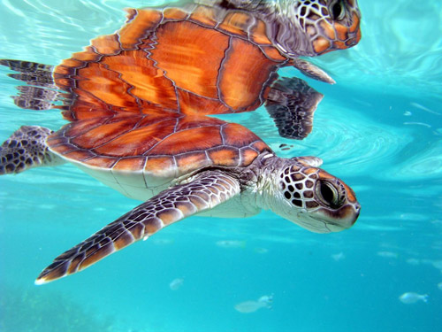 animal photography turtle 30 Beautiful Examples of Animal<br /> Photography