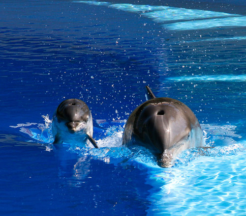 dolphine animal photography 30 Beautiful Examples of Animal<br /> Photography