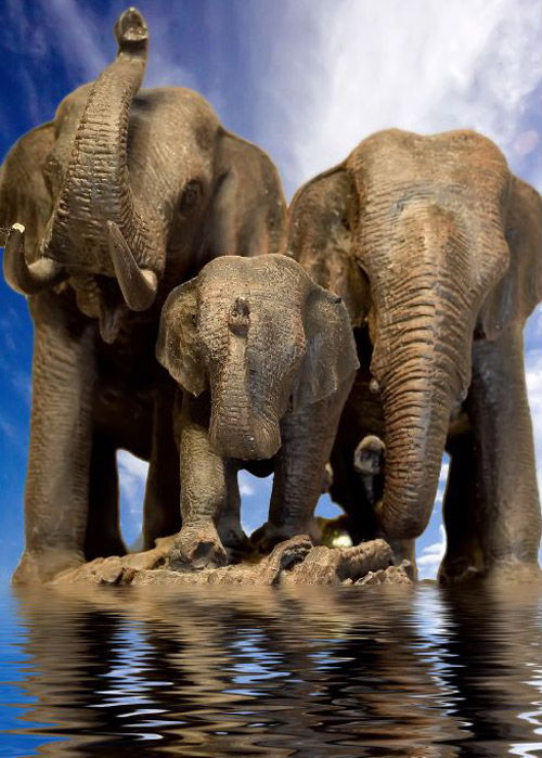 elephant wildlife photography 30 Beautiful Examples of Animal<br /> Photography