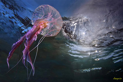jellyfish animal photography 30 Beautiful Examples of Animal<br /> Photography
