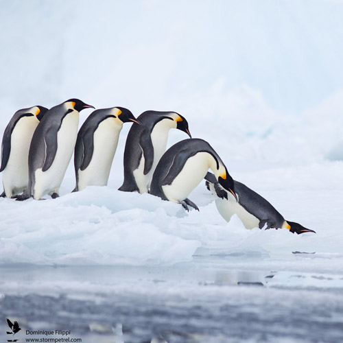 penguin animal phoography 30 Beautiful Examples of Animal<br /> Photography
