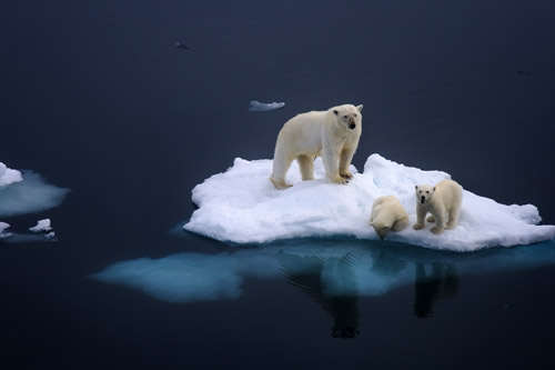 polar bears animal photography 30 Beautiful Examples of Animal Photography