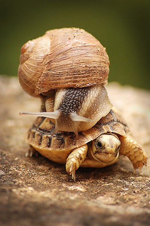 turtle and snail animal photography 30 Beautiful Examples of  Animal Photography