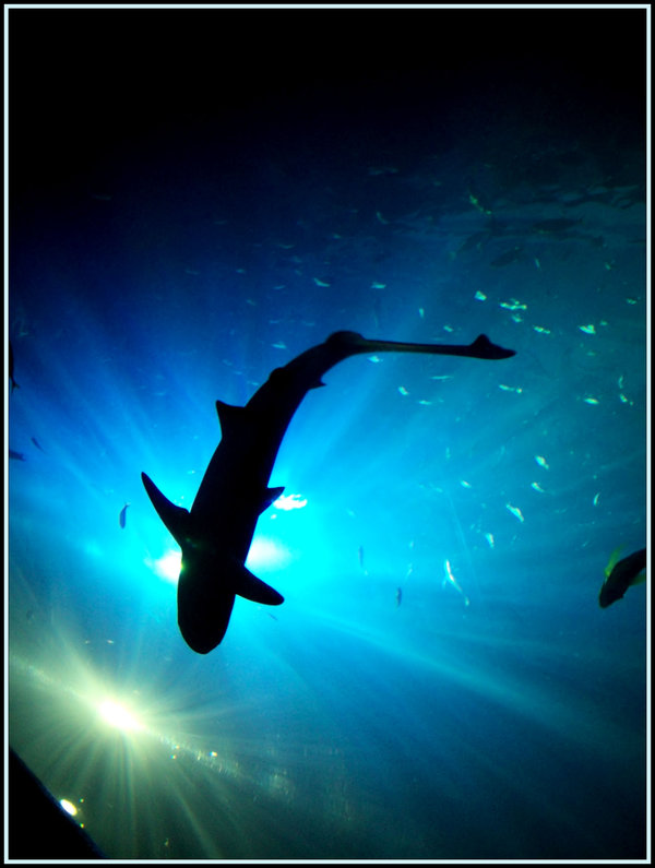 Supremacy by fabriloddo1 25 Beautiful Underwater Animals  Photography
