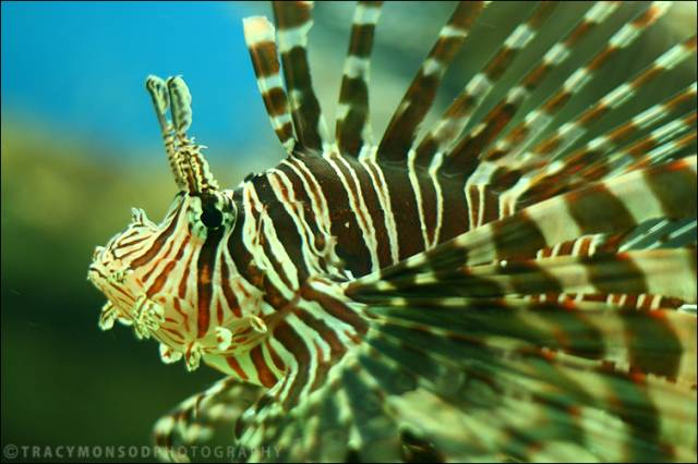 b4ce5970d504b6a9b50773afbbd8b2cf 25 Beautiful Underwater Animals  Photography